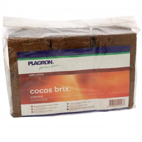 Cocos Brix x 6 PLAGRON