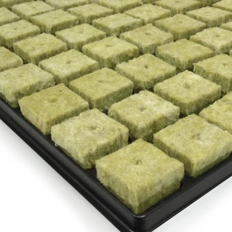 Plateau de 77 cubes de laine de roche Grodan pour semis