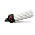 Ampoules CFL