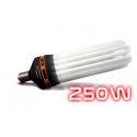Ampoule CFL 250W